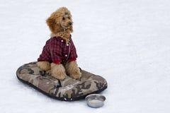 红色长卷毛狗在冬天 库存照片