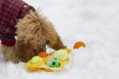 红色长卷毛狗在冬天 免版税库存照片