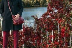 红色长裤和植物红色叶子  免版税库存图片
