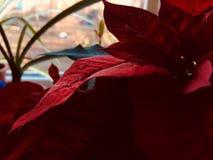 红色难以置信的植物 库存照片