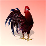 红色雄鸡,新年的标志 库存图片