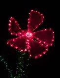 红色雏菊形状的圣诞灯装饰 库存照片