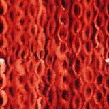 红色靛蓝shibori链子样式 无缝的水彩背景 免版税库存照片
