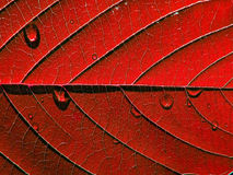 红色页结构树 图库摄影