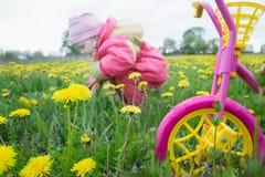洋红色颜色哄骗有黄色轮子和小收集蒲公英花的小孩女孩的三轮车在春天草甸 库存图片
