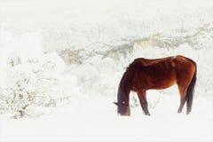 红色马从在山牧场地的雪下面赢得他们的provender 免版税库存照片
