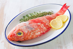 红色鱼用草本和柠檬在盘 库存图片