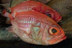 红色鱼, 2个片断待售 图库摄影