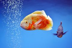 红色鱼 免版税图库摄影