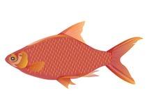 红色鱼 免版税库存照片