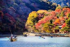 红色鸡爪枫秋天秋天, momiji树在京都日本 免版税图库摄影