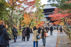 红色鸡爪枫秋天秋天, momiji树在京都日本 库存图片
