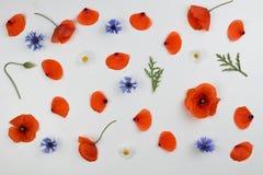 红色鸦片、矢车菊和绿色叶子 平的位置,顶视图 库存照片
