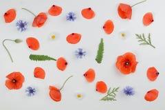 红色鸦片、雏菊、矢车菊和绿色叶子在白色背景 平的位置,顶视图 免版税库存照片