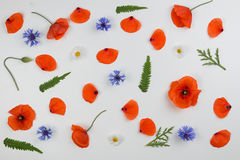 红色鸦片、雏菊、矢车菊和绿色叶子在白色背景 平的位置,顶视图 免版税库存图片