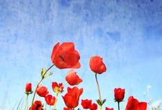 红色鸦片低角度照片反对天空的与光爆炸 图象是被定调子的减速火箭的过滤器 图库摄影