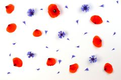 红色鸦片和蓝色矢车菊在白色背景 平的位置,顶视图 库存照片