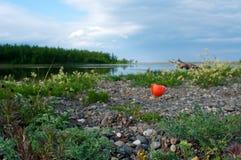 红色鸦片和贝加尔湖背景 库存照片