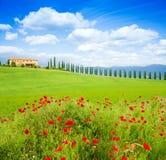 红色鸦片在托斯卡纳风景,意大利开花 免版税库存图片