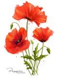 红色鸦片开花并且飞溅 免版税库存图片