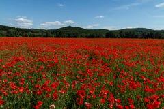 红色鸦片的一个大领域与山的在的背景中 库存照片