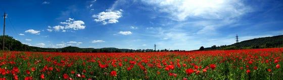 红色鸦片的一个大领域与山的在的背景中 图库摄影