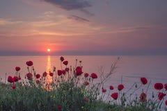 红色鸦片的美好的领域在日出的在海附近 免版税库存图片