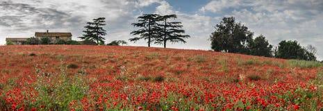红色鸦片的领域开花与老房子和树 免版税库存图片