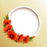 红色鸦片花卉圆的框架,传染媒介 免版税库存照片