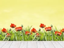 红色鸦片花卉边界在白色木大阳台的,自然背景 免版税库存照片