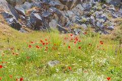 红色鸦片花和石墙,标志为记忆天 图库摄影