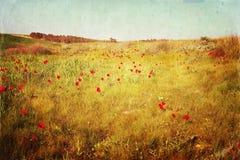 红色鸦片领域抽象照片  被过滤的和被构造的图象 免版税库存照片