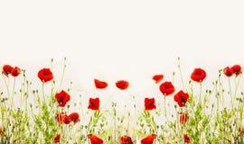红色鸦片,室外花卉自然背景 免版税库存图片