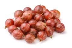 红色鹅莓 免版税库存照片