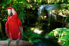 红色鹦鹉 库存照片