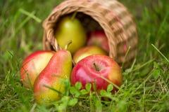 红色黄色苹果和梨在一个柳条筐在绿草户外特写镜头驱散了 库存照片