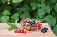 红色黑白无核小葡萄干莓果在一个玻璃花瓶的 免版税库存照片