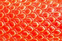 红色龙称背景或蛇灰泥 免版税库存图片