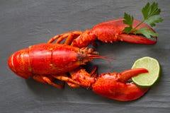 红色龙虾用荷兰芹和石灰在爪在黑石乐趣海鲜概念 免版税图库摄影