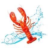 红色龙虾用水飞溅 免版税库存图片