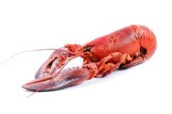 红色龙虾 免版税库存照片