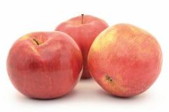 红色,成熟苹果在白色背景隔绝的Jonagold 图库摄影