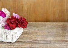 红色,桃红色和白色康乃馨花 免版税库存照片