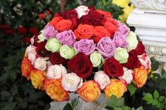 红色,桃红色,绿色,橙色,紫色罗斯花球在庭院里 免版税库存照片