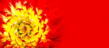 红色,桔子,黄色火焰颜色大丽花 宏观照片的红色黄色大丽花关闭作为宽摘要几何花卉样式细节 库存照片