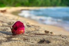 红色,水多的龙果子在沙子说谎 库存照片