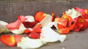 红色,白色玫瑰花瓣在一个大理石瓦片驱散了 股票视频