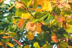红色,绿色橙色秋叶背景 热带叶子背景 可视巴厘岛美丽的印度尼西亚海岛kuta人连续形状日落的城镇 库存图片