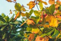 红色,绿色橙色秋叶背景 热带叶子背景 可视巴厘岛美丽的印度尼西亚海岛kuta人连续形状日落的城镇 免版税库存照片