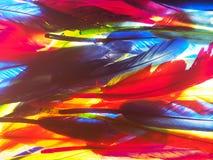 红色,绿色,黄色,蓝色羽毛 背景照片 免版税库存图片